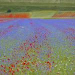 Umbria scenery_MG_1804 ©2014 Eric van den Brulle