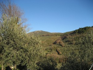 A view from the Trampetti olive grove.