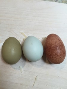 Fresh organic eggs! These hens must have known Easter is right around the corner.