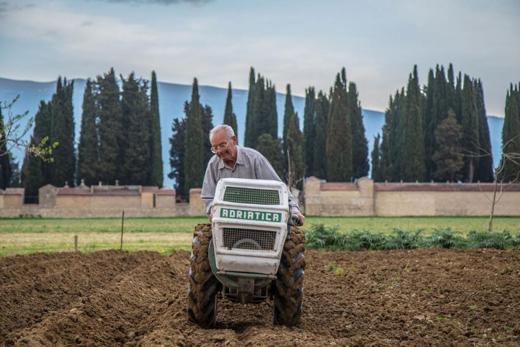 Farmer in his Field