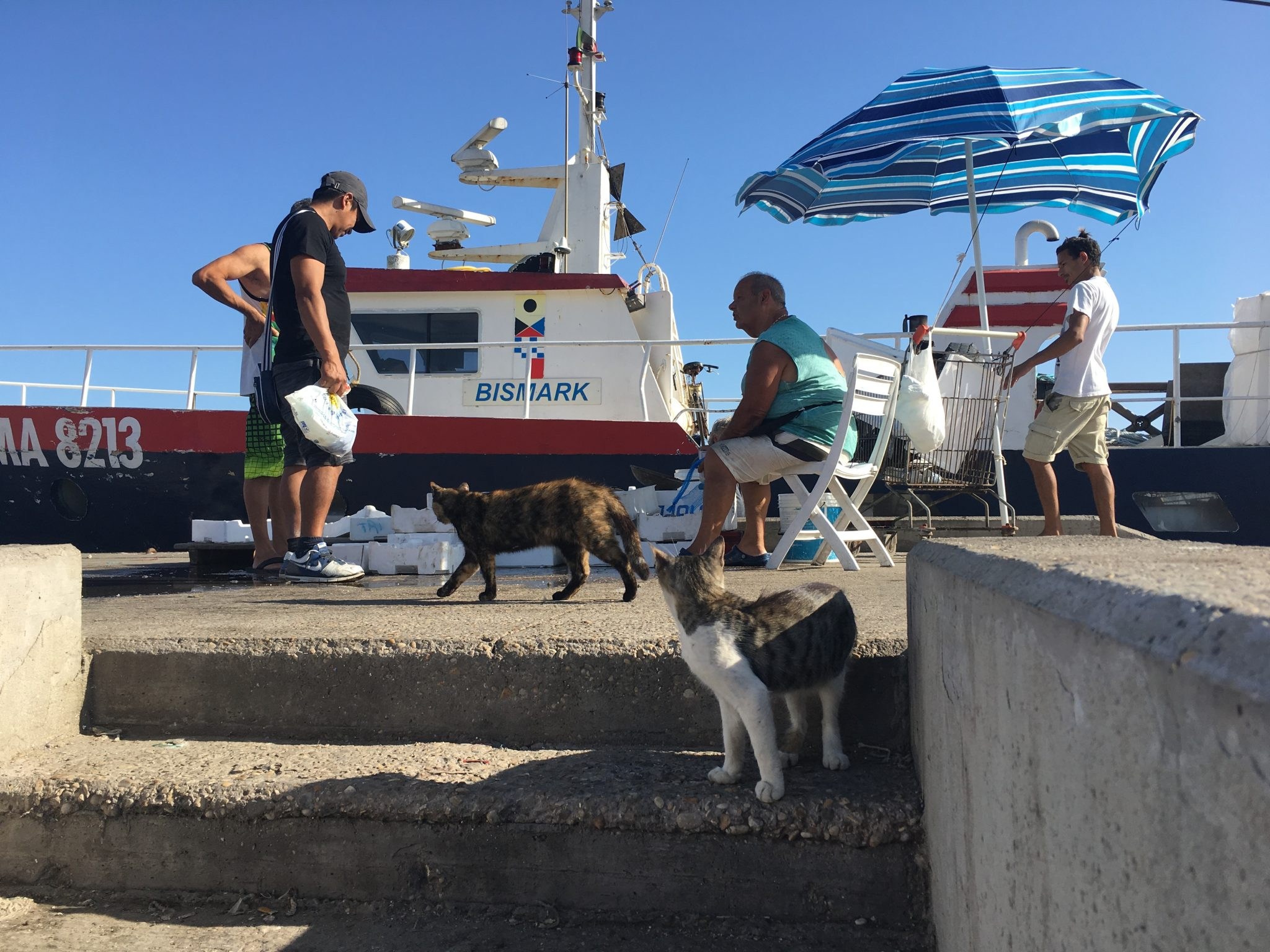 Customers - of the two legged and four legged variety - seeking good deals at Fiumicino's seafood market.