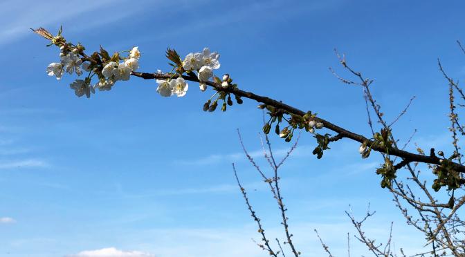 SpringGreen1